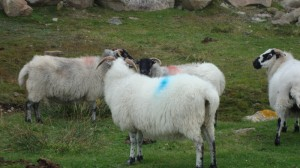 Sheepside